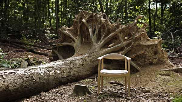 503_oak_tree